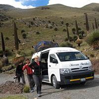Puya Raimondy in the way to Pastoruri Glacier