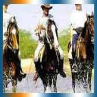Horse Safari in Ahmedabad
