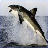 Shark Dive Tour