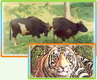 Wildlife in Tripura