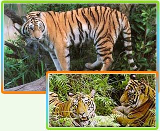 Wildlife Tours in Uttaranchal