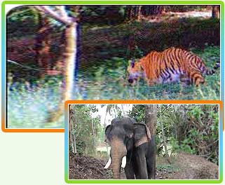Wildlife Tours in Tamil Nadu