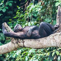 Aac Bonobo Nursery Sanctuary in Kinshasa