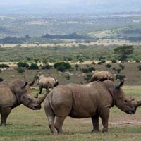 Aberdare National Park in Nairobi