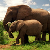 Addo Elephant National Park in Port Elizabeth