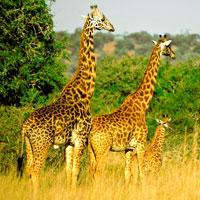 Akagera National Park Rwanda in Eastern-Rwanda