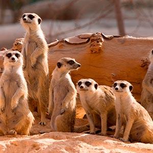 Al Ain Zoo in Al Ain