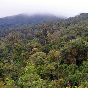 Amboro National Park(Santa Cruz)