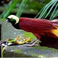 Bali Bird Park in Bali