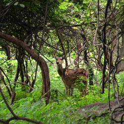 Balpakram National Park in Garo Hills