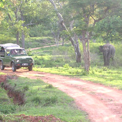 Bandipur National Park in Mysore