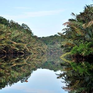 Berbak National Park