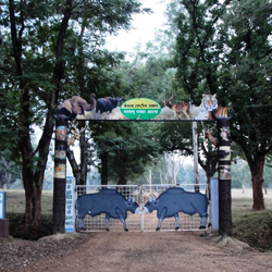 Betla National Park in Latehar