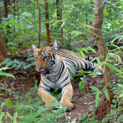 Bhamragarh Wildlife Sanctuary in Chandrapur