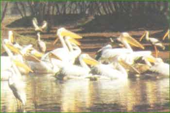 Bharatpur Bird Sanctuary in Bharatpur