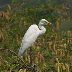Bhindawas Bird Sanctuary in Jhajjar