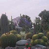 Botanical Garden in