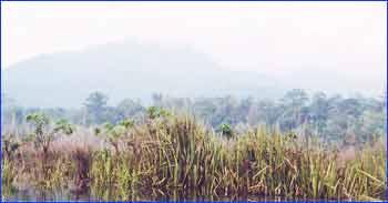 Bukit Chini in Perak