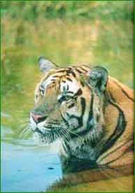 Buxa Tiger Reserve in Jalpaiguri