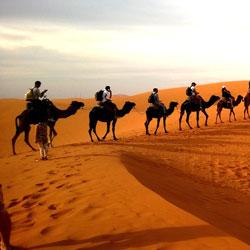 Camel Safari In Bikaner in Bikaner