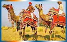 Camel Safari In Jaisalmer in