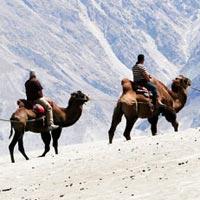 Camel Safari In Ladakh in Leh Ladakh