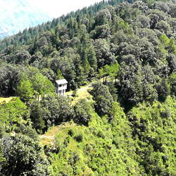 Chail Sanctuary in Chail