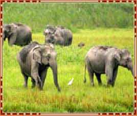 Chandaka Elephant Reserve in Bhubaneswar