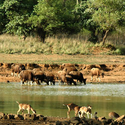 Chaprala Wildlife Sanctuary in Chandrapur