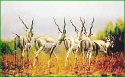 Chaprala Wildlife Sanctuary in Chandrapur