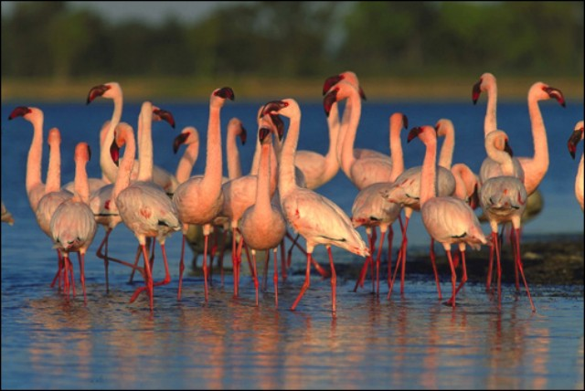 Chelmsford Nature Reserve, KwaZulu Natal
