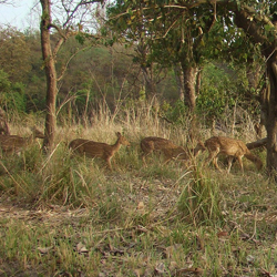 Chilla Wildlife Sanctuary in Haridwar