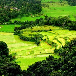 Coorg Hill Station