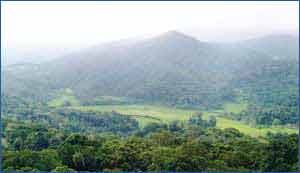 Coorg Hills in Coorg