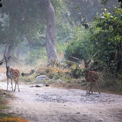 Corbett National Park in Ramnagar