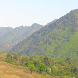 Dachigam National Park in Kashmir