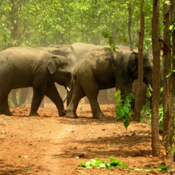 Dalma Wildlife Sanctuary in Jamshedpur