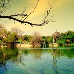 Deer Park in New Delhi