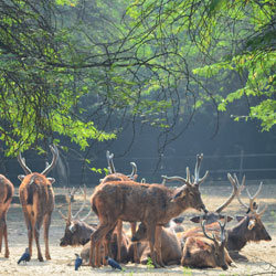 Delhi Zoo in New Delhi
