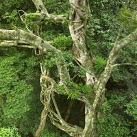 Dlinza Forest Nature Reserve in Kwazulu Natal