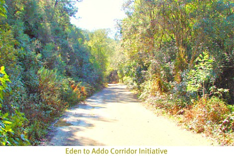 Eden to Addo Biodiversity Corridor in Garden Route