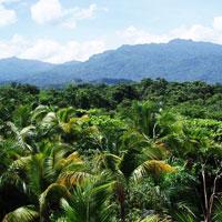 El Yunque Rainforest (Puerto Rico) in Puerto Rico