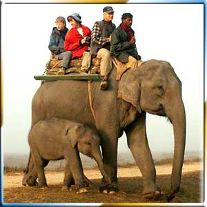 Elephant Safari Tours
