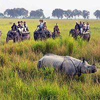 Elephant Safari in Kaziranga National Park in Golaghat