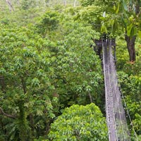 Falealupo Rainforest Preserve