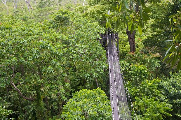 Falealupo Rainforest Preserve in Falealupo