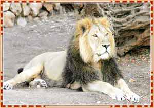 Gir National Park in Junagadh