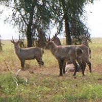 Gorongosa National Park in Gorongosa