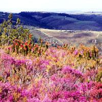 Grootvadersbosch Nature Reserve in Garden Route