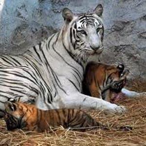 Gwalior Zoo